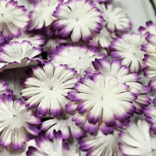 Daisy ,,Purple'' 50 ks